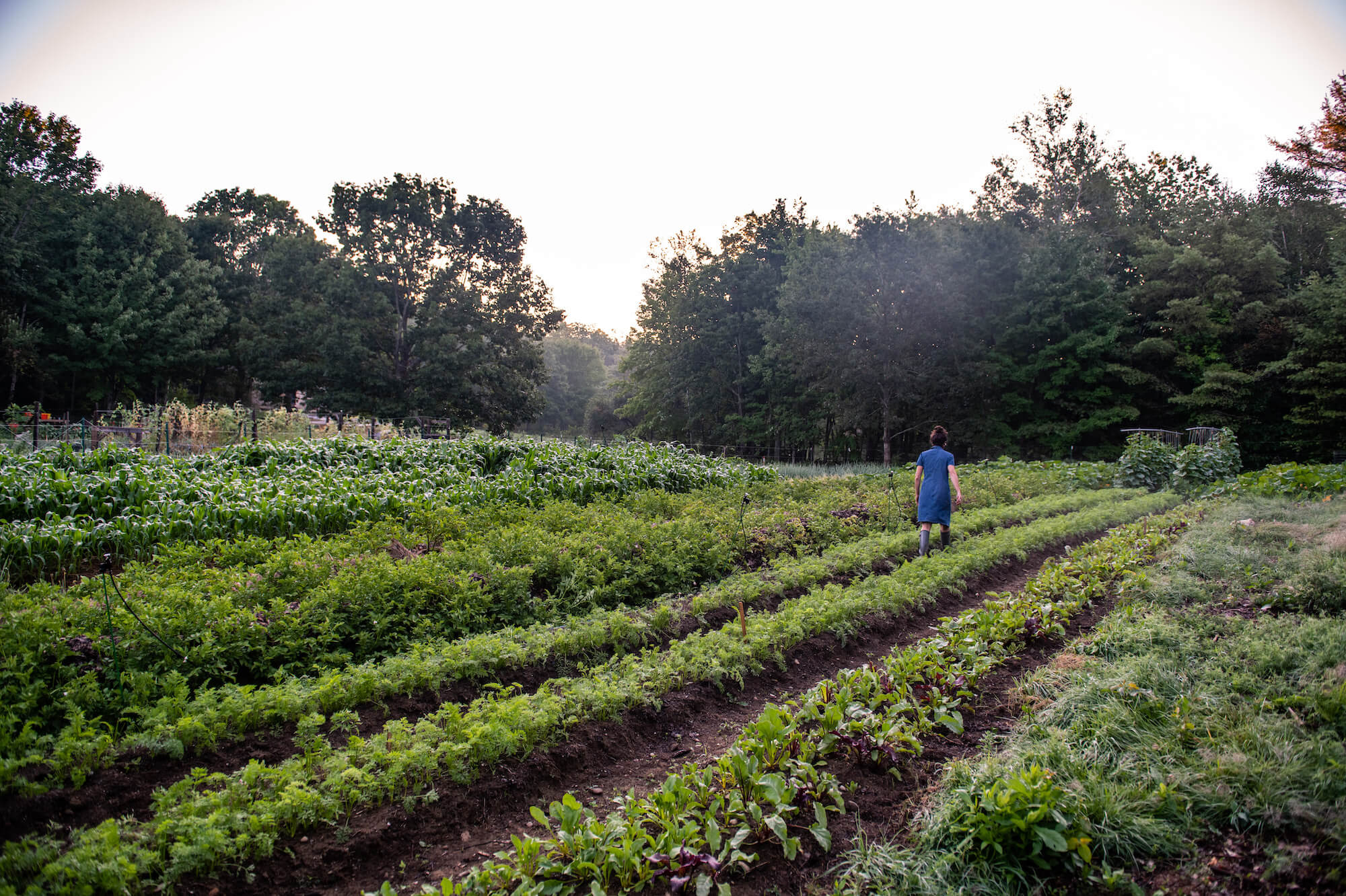 Veggies to Table a grow to donate farm in Maine