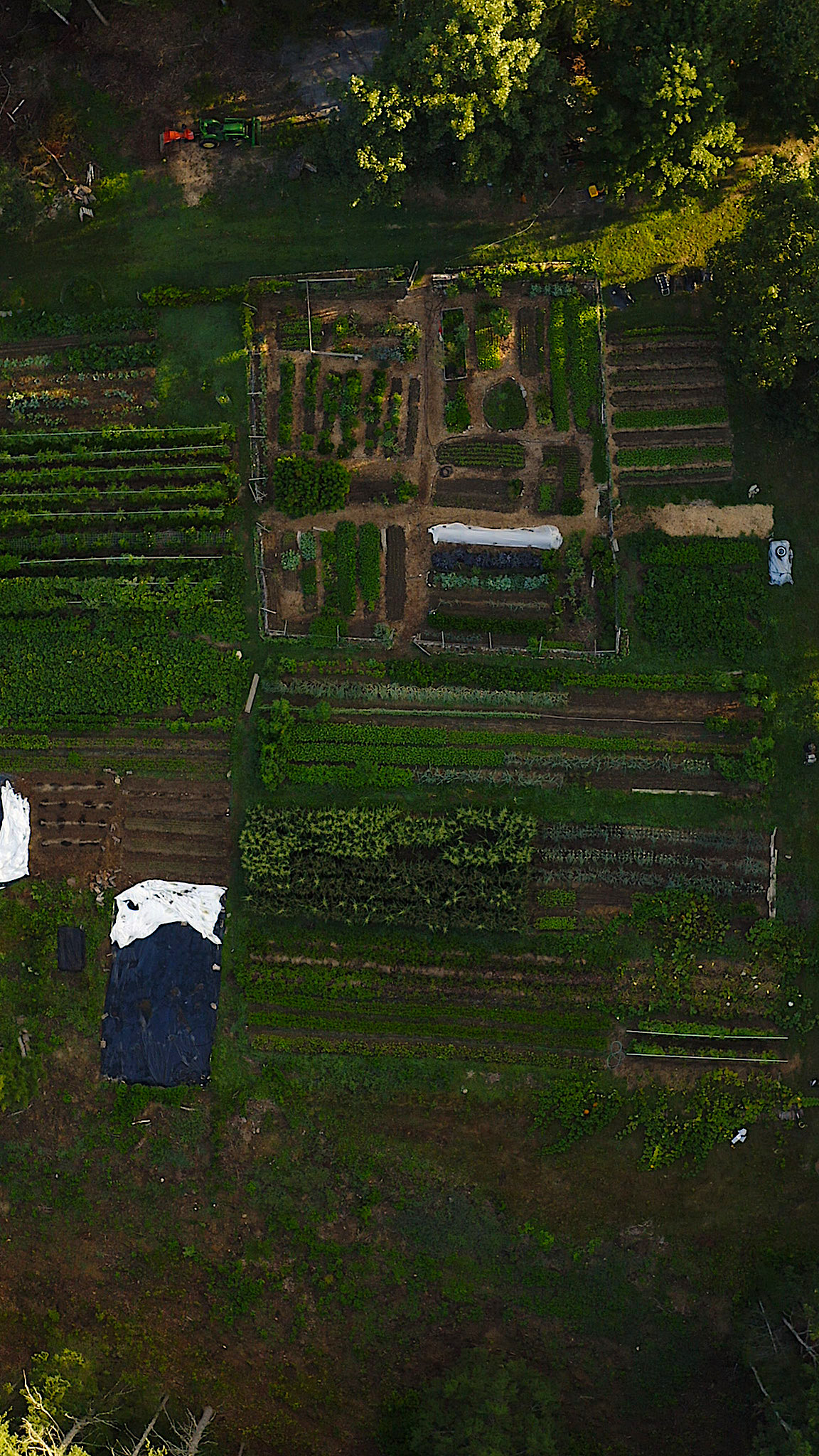 Veggies to Table view from above